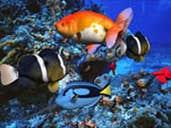 Play Underwater Hidden Object