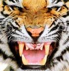 avatar for xxsarahxx42