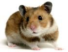 avatar for MrPigilay