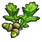 avatar for EnglishAcorn