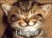 avatar for Kristinakiwi5838