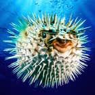 avatar for SnailB