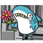 Shark sorry
