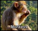 Play Monkeys