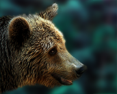 Play Bear Escape