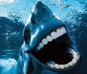 Play farty the shark