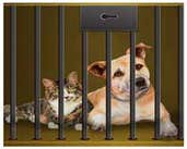 Play Rescue our pets