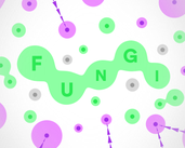 Play FUNGI
