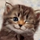avatar for Alice13