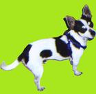 avatar for CoolDudeKewl