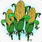 avatar for Kingcob