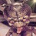 avatar for Starfun