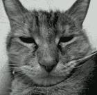 avatar for jakeonaut