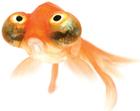 avatar for AndresMoncaMa