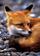 avatar for MarkusSwift
