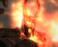 avatar for Tredoneye