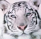 avatar for silvermist567