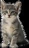 avatar for ViennaraVala