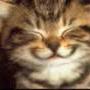 avatar for grimreaperkillah