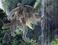 avatar for SolitariusLupus