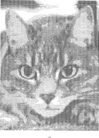 avatar for TheFurryFury1