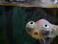 avatar for Kathybunbuns
