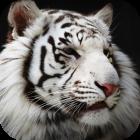 avatar for Sebinsky2014