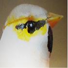 avatar for Baerstein