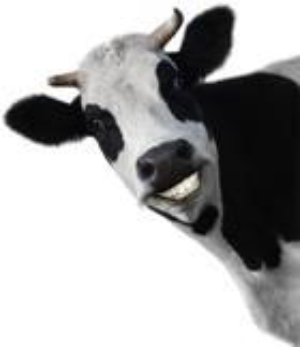 avatar for DukeMichael101