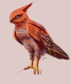 avatar for gaakihodevoirra4