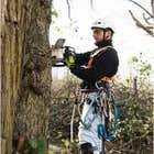 avatar for treeservicestam